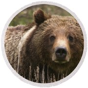 Grizzly Portrait Round Beach Towel by Steve Stuller