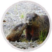 Round Beach Towel featuring the photograph Groundhog Kiss by Betty-Anne McDonald