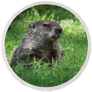Groundhog Posing  Round Beach Towel