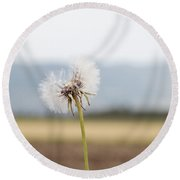 Groundsel In The Wind Round Beach Towel