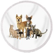 Group Of Cats And Dogs Looking Up On White Round Beach Towel