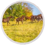 Group Of Morgan Horses Trotting Through Autumn Pasture. Round Beach Towel