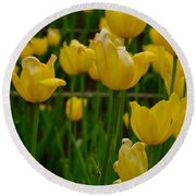Grouping Of Yellow Tulips Round Beach Towel