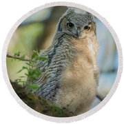 Growing Into A Great Horned Owl Round Beach Towel