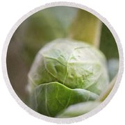 Grumpy Brussel Sprout Round Beach Towel