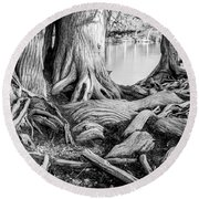 Guadalupe Bald Cypress In Black And White Round Beach Towel