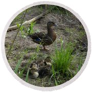 Guarding The Ducklings Round Beach Towel by Donald C Morgan