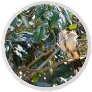 Round Beach Towel featuring the photograph Guira Cuckoo by Donna Brown
