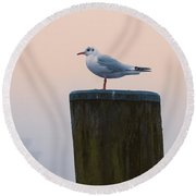 Gull And Fog Round Beach Towel