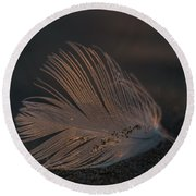 Gull Feather On A Beach Round Beach Towel