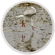 Gull Fishing 01 Round Beach Towel