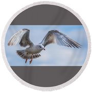 Gull Hover In Gray Round Beach Towel by Jeff at JSJ Photography