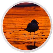 Gull Caught At Sunrise Round Beach Towel by Allan Levin