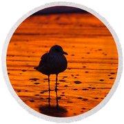 Gull Caught At Sunrise Round Beach Towel