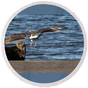 Round Beach Towel featuring the photograph Gull With Sea Otter Photobomb by Lora Lee Chapman
