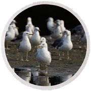 Gulls At The Beach Round Beach Towel