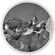 Round Beach Towel featuring the photograph Gulls On Guard - Pt Mugu, California by Samuel M Purvis III