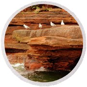 Gulls On Outcropping Round Beach Towel