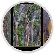 Gum Trees At Lake St Clair Round Beach Towel by Werner Padarin