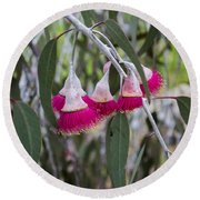 Round Beach Towel featuring the photograph Gumnut Flowers by Angela DeFrias