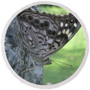 Hackberry Emperor Butterfly Round Beach Towel by Donna Brown