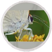 Hairstreak Closeup Round Beach Towel