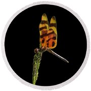 Round Beach Towel featuring the photograph Halloween Pennant Dragonfly .png by Al Powell Photography USA