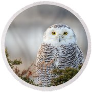 Hampton Beach Nh Snowy Owl Round Beach Towel