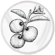 Hand Drawn Of Fresh Tallow Plum On White Background Round Beach Towel