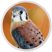 Handsome American Kestrel Round Beach Towel