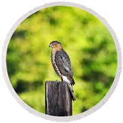 Round Beach Towel featuring the photograph Handsome Hawk by Al Powell Photography USA