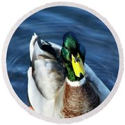 Handsome Male Mallard Round Beach Towel