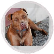 Handsome Red Nose Pit Jak Round Beach Towel by Belinda Lee