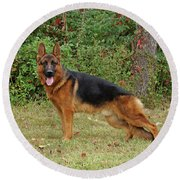 Round Beach Towel featuring the photograph Handsome Rocco by Sandy Keeton