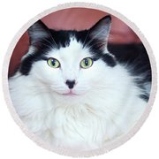 Round Beach Towel featuring the photograph Handsome Tuxy by Byron Varvarigos