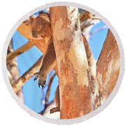 Round Beach Towel featuring the photograph Hanging Around, Yanchep National Park by Dave Catley