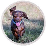Happy Dachshund Round Beach Towel