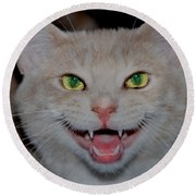 Happy For Spring Cat Round Beach Towel