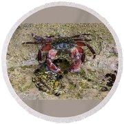 Happy Little Crab Round Beach Towel