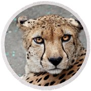 Harbin Leopard Round Beach Towel