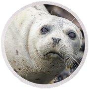 Harbor Seal Portrait Round Beach Towel