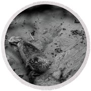 Harbor Seal Pup Monochrome  Round Beach Towel