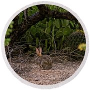 Round Beach Towel featuring the photograph Hare Habitat H22 by Mark Myhaver