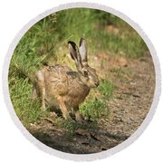 Hare In The Woods Round Beach Towel
