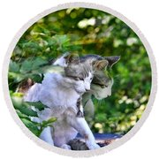 Round Beach Towel featuring the photograph Harlequin Cat Twins by Chriss Pagani