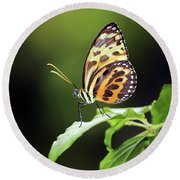 Round Beach Towel featuring the photograph Harmonia Tiger Wing by Grant Glendinning
