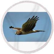 Harrier In Flight Round Beach Towel