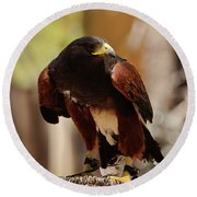 Round Beach Towel featuring the photograph Harris Hawk by Debby Pueschel