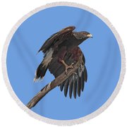 Harris Hawk - Transparent Round Beach Towel