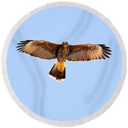 Round Beach Towel featuring the photograph Harris's Hawk H36 by Mark Myhaver